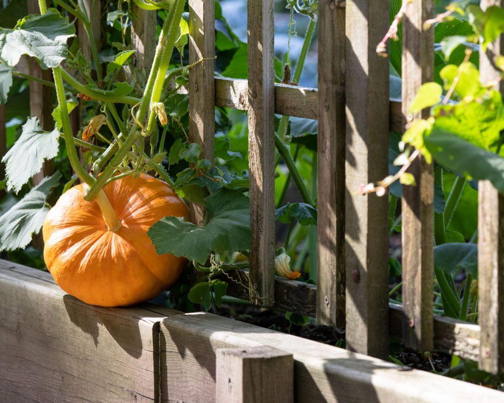 Maison-Estournel-Vegetable-Garden-1@G-Gardette